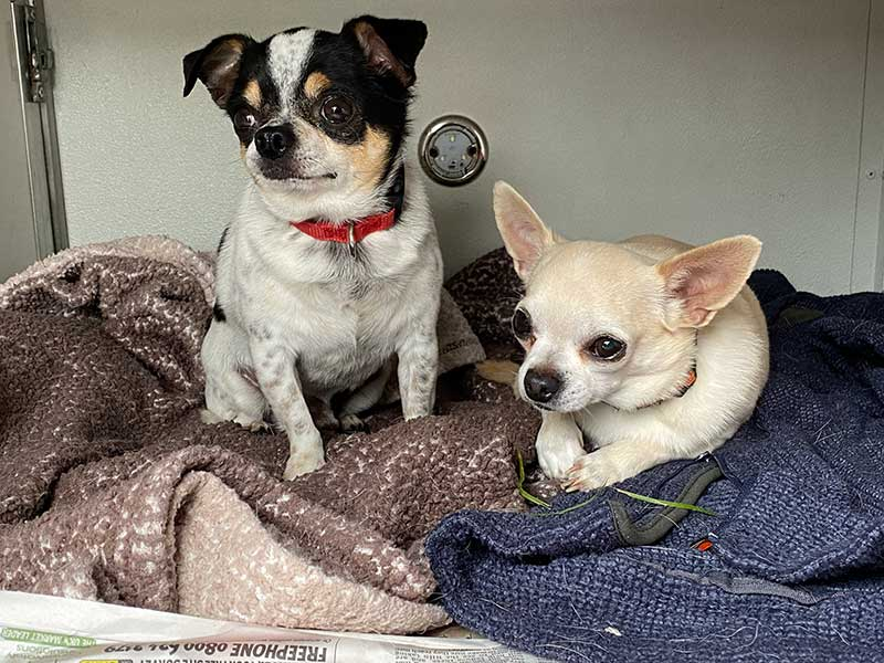 pet travel stories : Samwell and Boise, happy to share a bedroom in our van