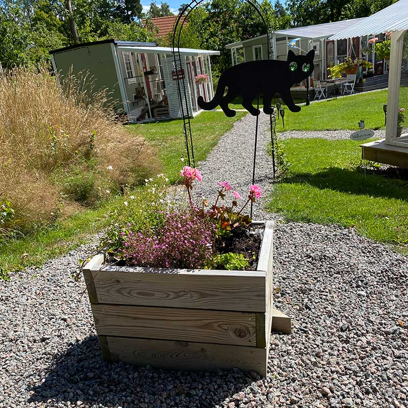 pets from the Nordics : We collected the cats from a delightful cattery run by Marie