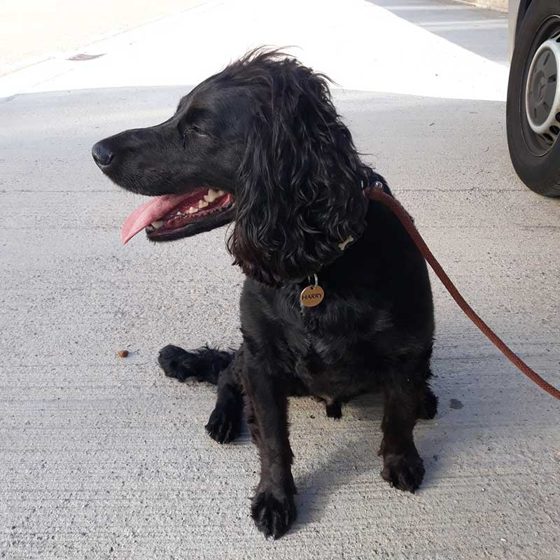 pets who travelled with us : Harry, a happy and seasoned traveller