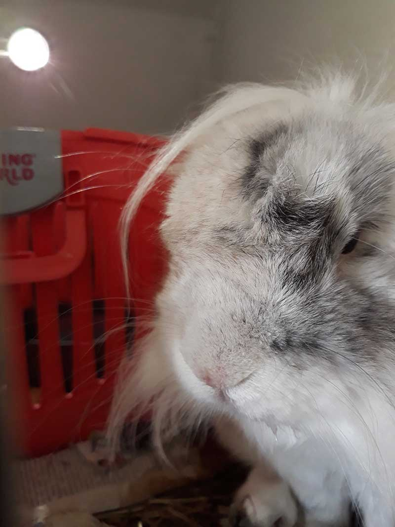 pets who travelled with us : What an irresistible bunny!