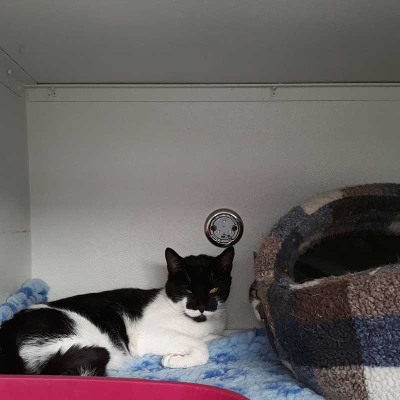 pets who travelled with us : Tuxedo cat Marvin