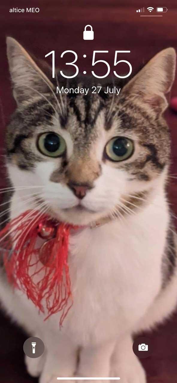Tabby cat Hank