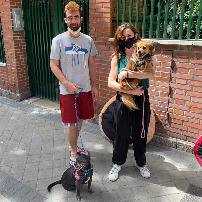 Adorable Coquito and Louie from London reached Madrid, where Laura and partner were over the moon to see them again