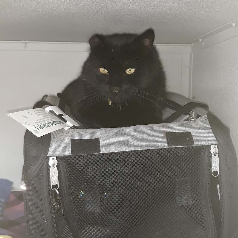 pets who travelled with us : Jasper and Flynn