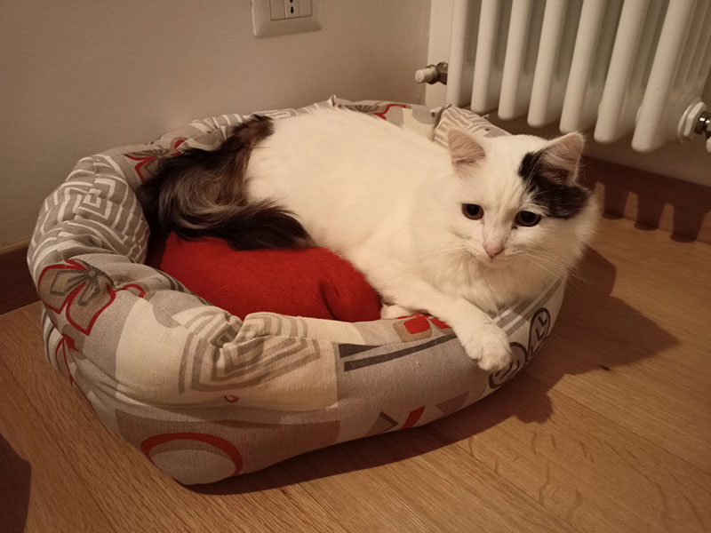 "Corinne told us: ""Thank you for your help & perseverance with getting our cats to Italy for us..."