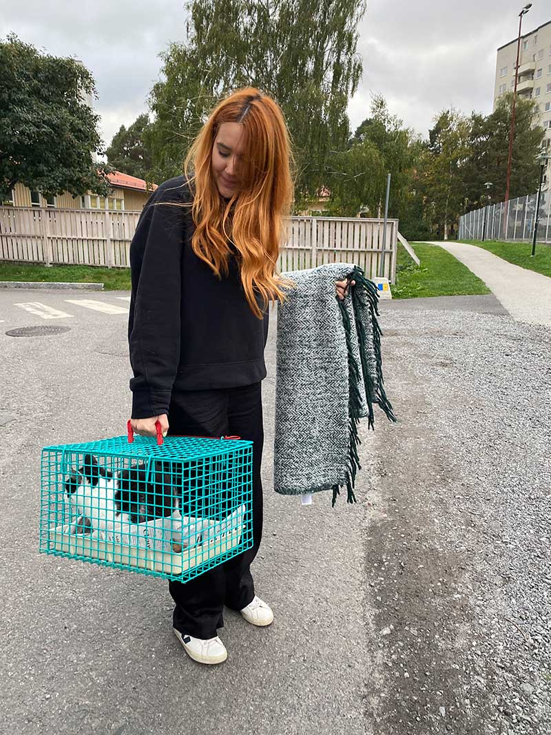 Germany and the Nordics : Emma arrives with Sarah's cats