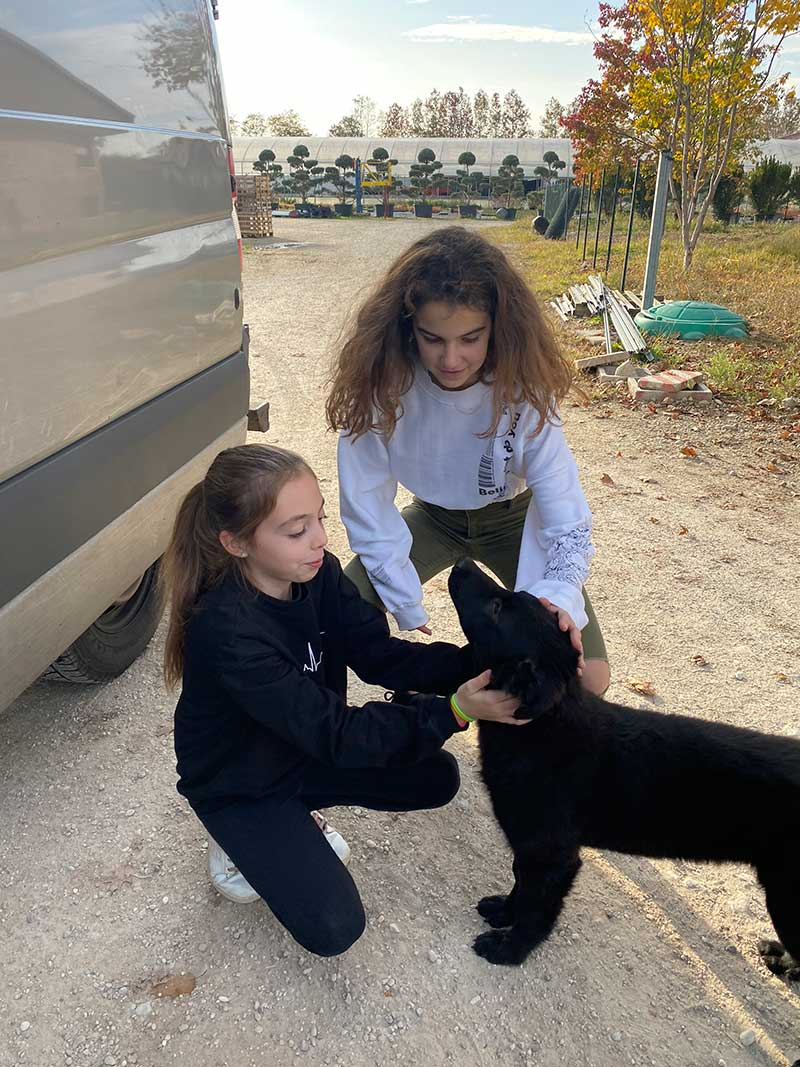 reuniting dogs : Nerone saying goodbye to her breeder's daughters
