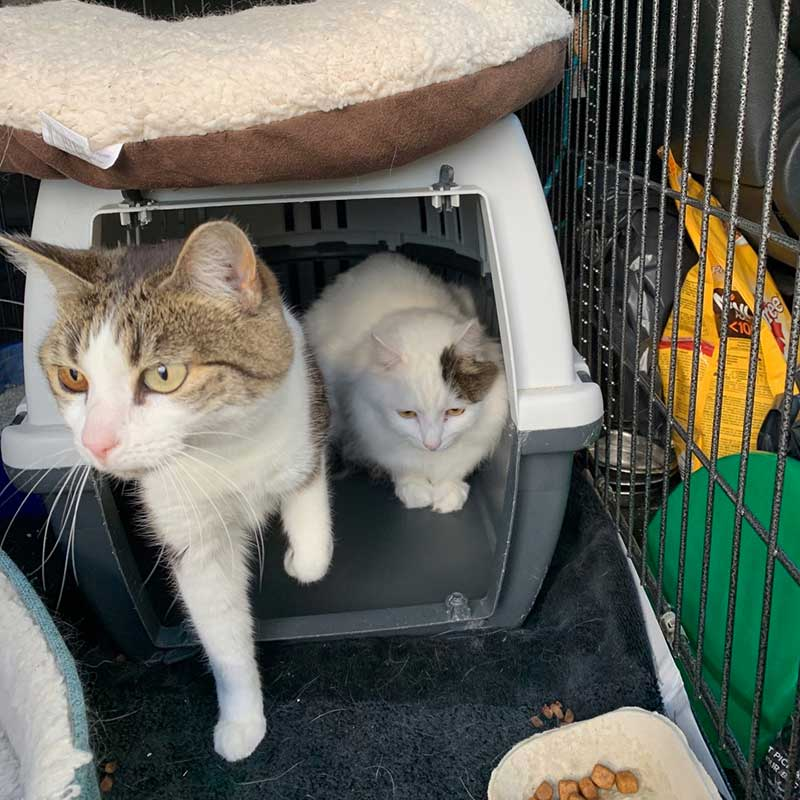 pet travel : Bonded pair Mary and Mungo