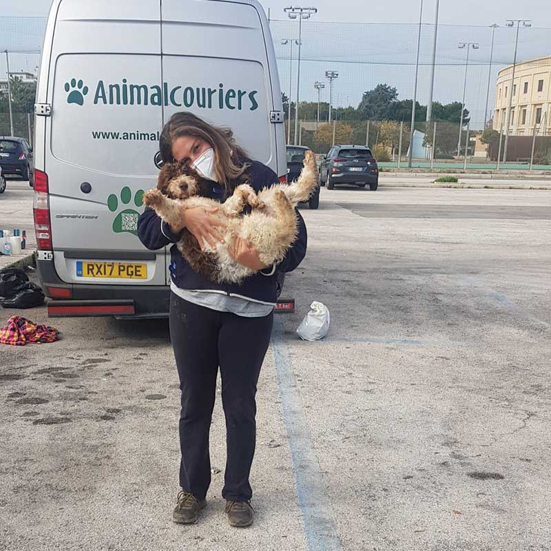 pet transport news : Playful Py waving from the arms of his breeder, Silvia