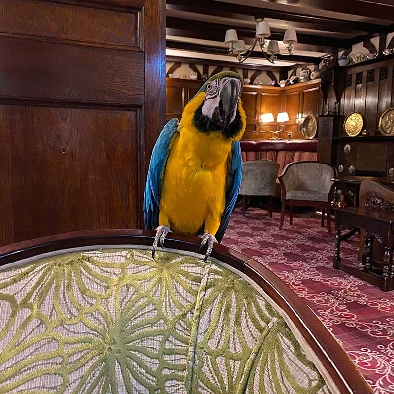 Mike the macaw was our receptionist for the evening