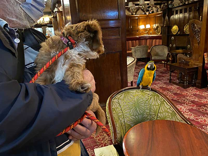 puppies and kittens : In Penrith, we took the puppy into the George Pub, where we stopped for the night. We received a very warm welcome and heard lovely stories about the landlords' past and present pets.