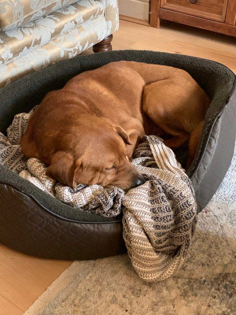 14 gorgeous dogs : Kemal loving his new bed