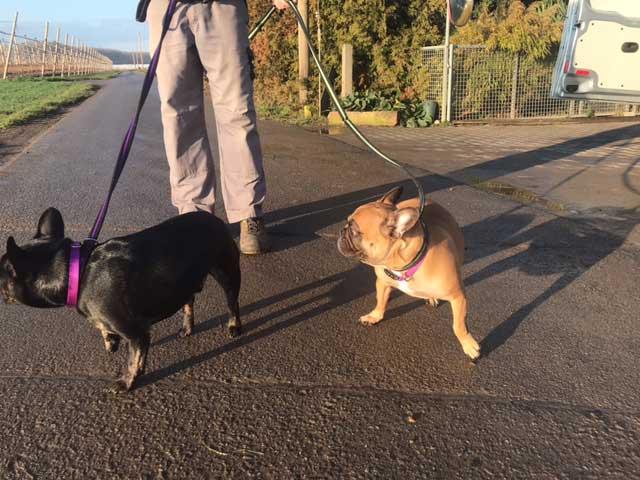 Splendid Bella and Leroy
