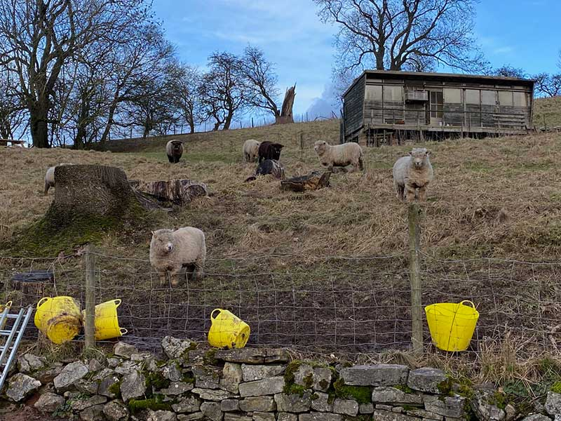 The sheep popped down the hill to check out the new arrival