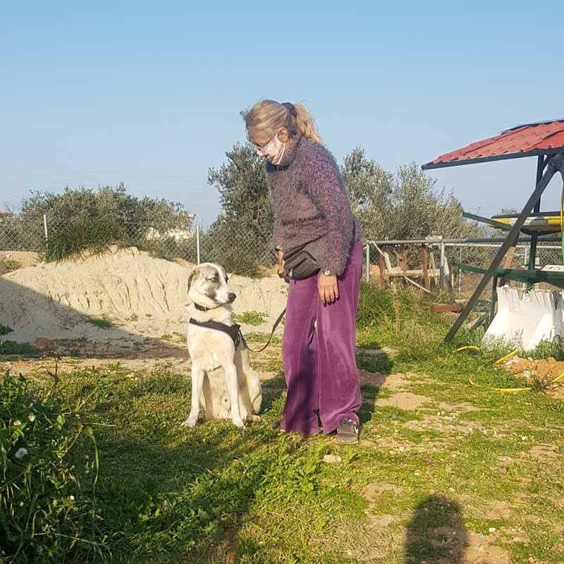 pets travelling from Greece and Italy : Ivan saying goodbye to his rescuer