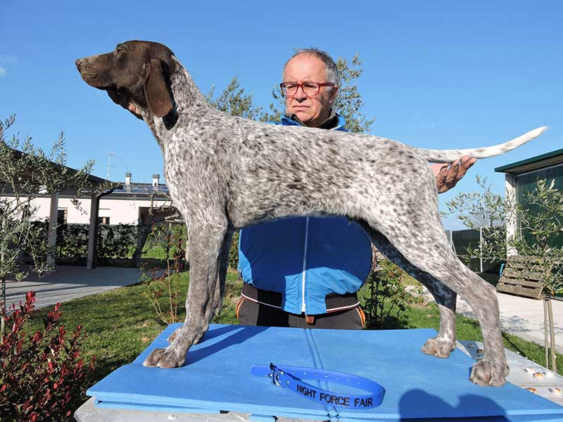 Pointer pups: Fair