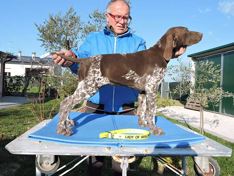 Pointer pups: Lady of Avalon