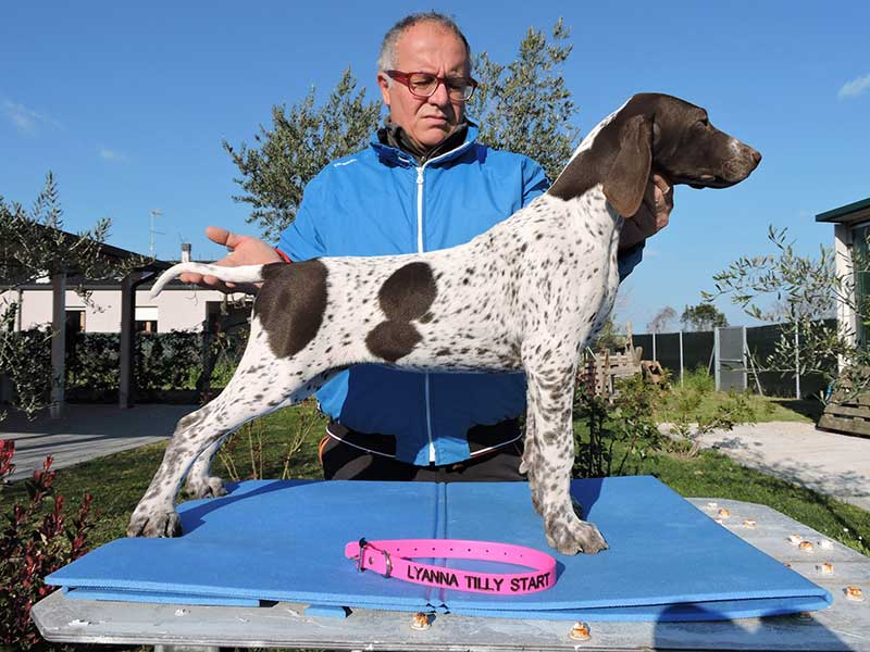 Pointer pups: Lyanna