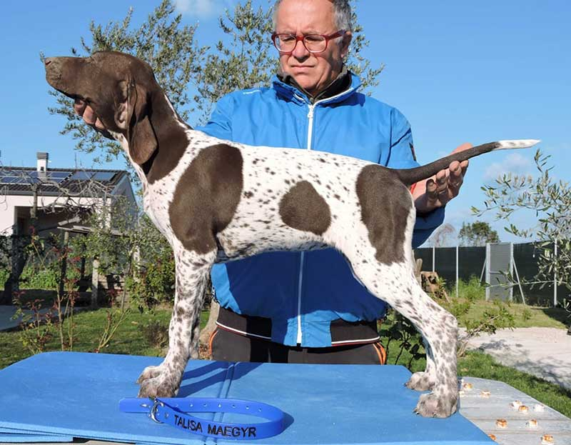 Pointer pups: Talisa