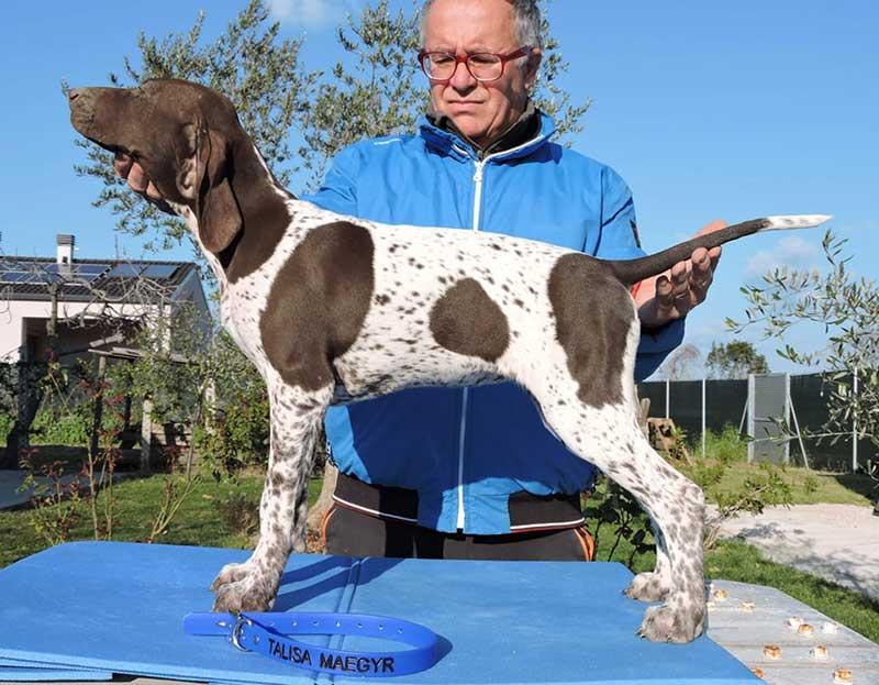 Pointer pups: Talisa