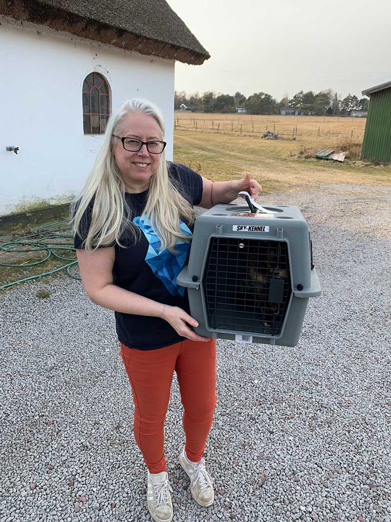 Netherlands and Denmark : Lorraine welcomes her cats to their new home in Melby