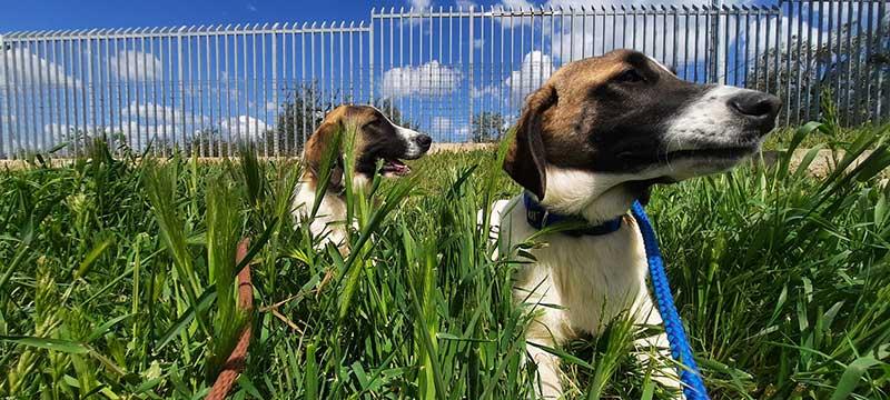 Both dogs love long grass, sunrises and sunbathing