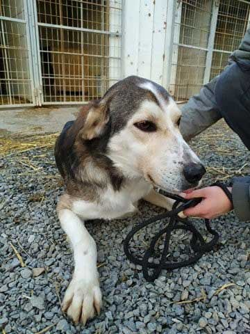 Dino, another dog dumped at the shelter, travelled with us to new owner Alison in Scotland