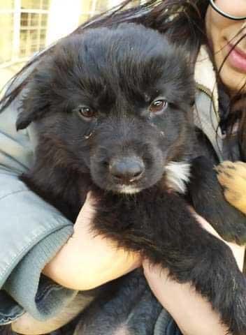 Cute little Romeo