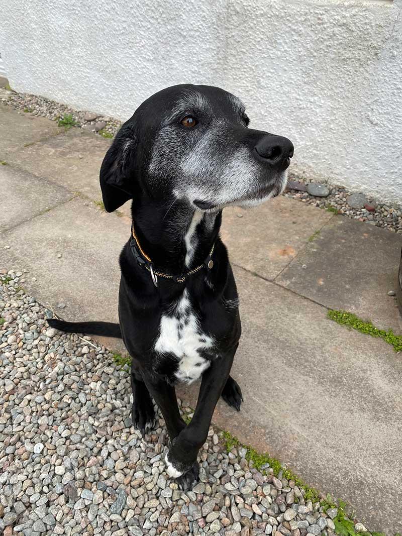 Tartan trips: Handsome hound Riley
