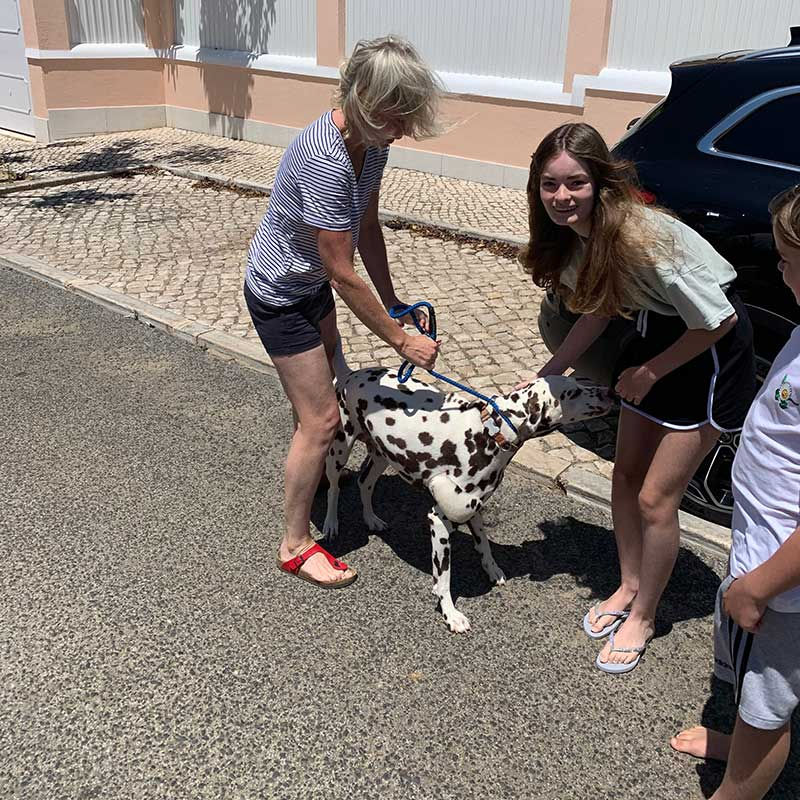 Delightful Dalmatian Mungo travelled from Hampshire for a reunion with his owners, the Kent family, in Cascais, Portugal