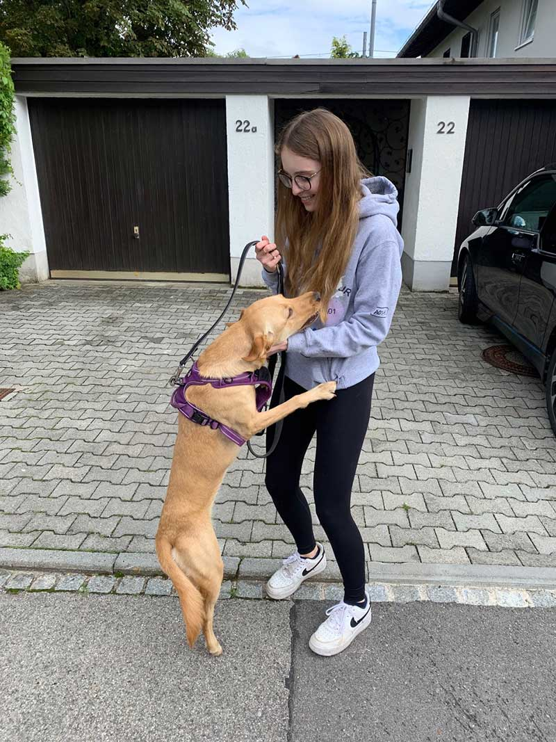 Lively Labrador Mei travelled with us from London to Munich for a reunion with Christopher and family